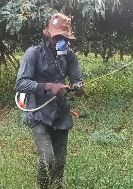 Fruit Flies – The Invincible Forces